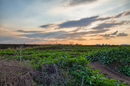 off path: Rural dirt road in the field during sunset Stock Photo