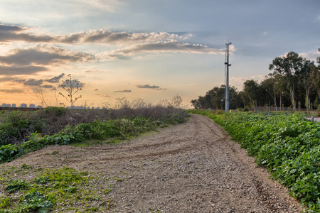 Rural dirt road in the field during sunset Stock Photo