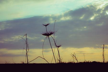 vegetation: Silhouette of vegetation at sunset