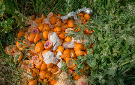 rinds: Pile of bright freshly squeezed orange rinds thrown outdoor on green vegetation