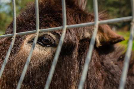 two face: Donkey behind metal fence. Stock Photo