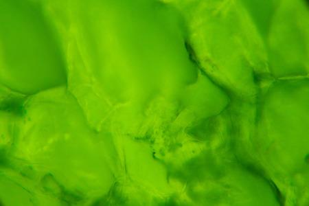 cucumber: Cucumber under the microscope.