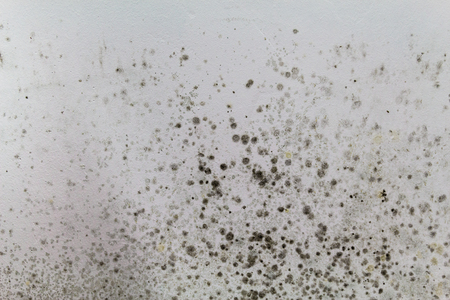 Black mold on a white wall.