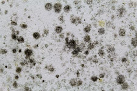 白い壁にカビを黒。 写真素材 - 56559168