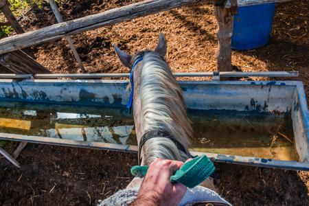 caballo bebe: Caballo bebe agua de un tanque de agua - jinete de primera persona POV.