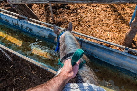 Horse drinks water from a water tank - Rider first person pov.