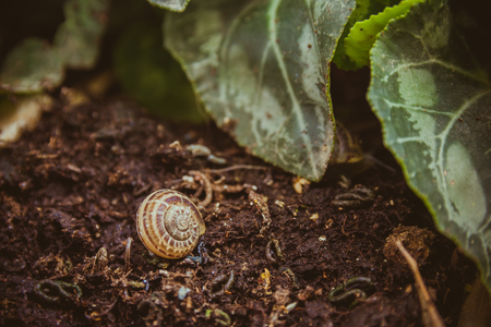 clam gardens: Empty snail shell on the ground at the garden.
