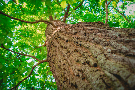 Tree from below with a shallow depth of field.
