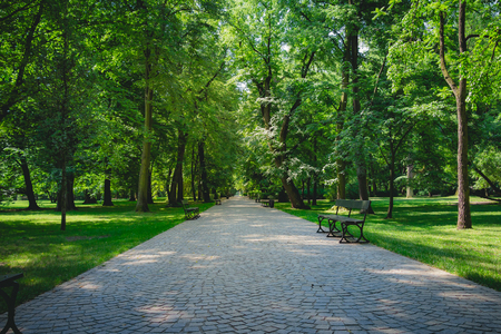 Beautiful alley with green trees in Lazienki Park at Warsaw Poland. Standard-Bild