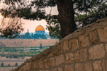 Panoramic view of Jerusalem old city and the Temple Mount through a tree during a dramatic colorful sunset. A view of the Dome of the Rock and Al Aqsa Mosque from the Mount of Olives in Jerusalem, Israel.