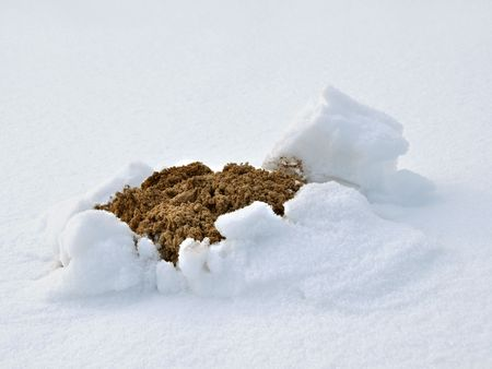 Molehill in snow. Winter in Poland. Stock Photo - 6401625