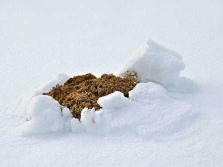 molehill: Molehill in snow. Winter in Poland. Stock Photo