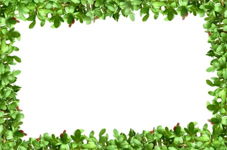 cress: Frame with fresh plants (cress) border on white background