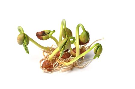 Sprouts of bean isolated on white background