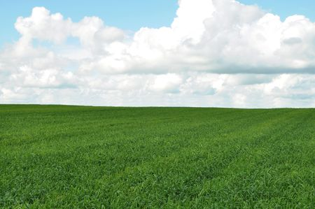 Field of green crop and blue sky with white clouds Stock Photo - 7073930