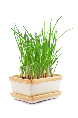 Fresh chives in pot isolated on white background