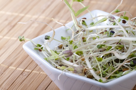 Close up of mixed beansprouts in a white bowl on a bamboo placemat. Stock Photo - 12082646