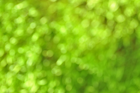 unclear: green bokeh effect. Spring or summer background