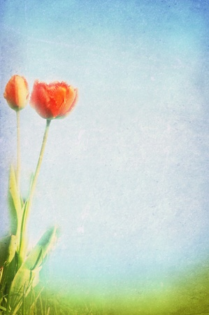vintage springsummer background photo