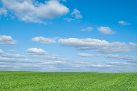 Field of green crop and blue sky with white clouds Stock Photo - 13865929