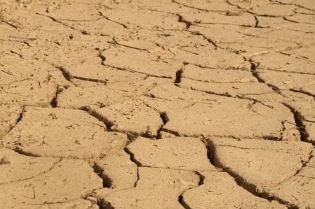 evaporate: Cracked ground in the summer  Dry ground without water