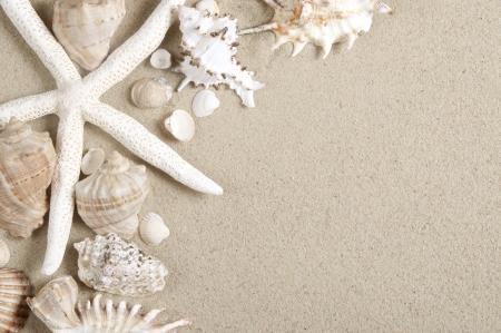 estrella de mar: conchas de mar y estrellas de mar con la arena como fondo