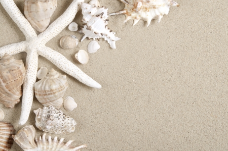 shell fish: sea shells and starfish with sand as background