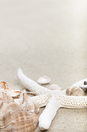 sea shells and starfish with sand as background  photo
