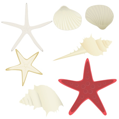 collection of vector starfishes and shells over white Stock Vector - 18500364