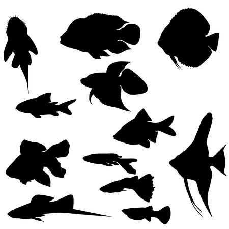 a freshwater fish: Collection of  aquarium fishes isolated on white  Vector