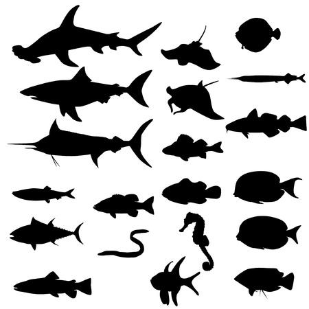 atun: Colección de los peces de agua salada aislada en blanco Vector