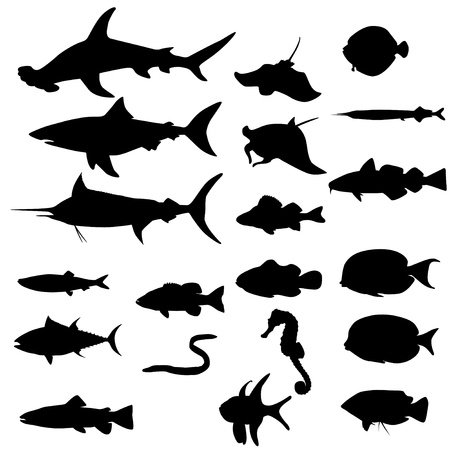hammerhead: Collection of saltwater fishes isolated on white  Vector