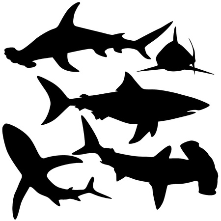 Collection of sharks isolated on white  Vector  Çizim
