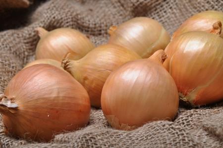 onions: cebollas en saco de arpillera