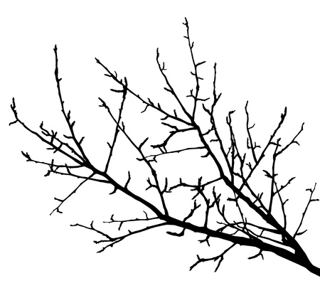 Realistic tree branches silhouette  Vector illustration  Stock Vector - 19140538