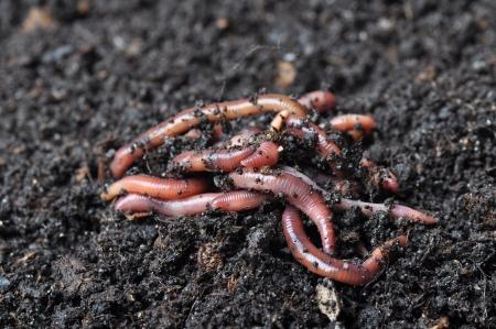 Group of earthworms Zdjęcie Seryjne - 19266073