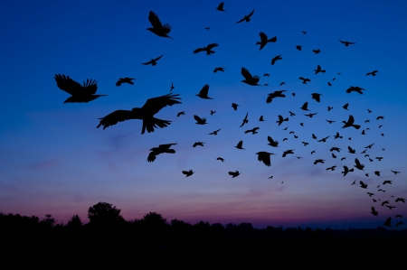 migrating birds: Silhouettes of birds at sunset