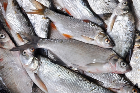 abramis: Fish background  Many Silver fishes