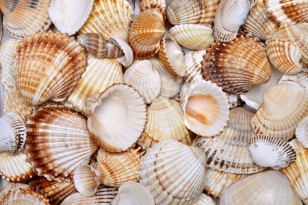 sea shells background, vacation texture Stock Photo - 19583016