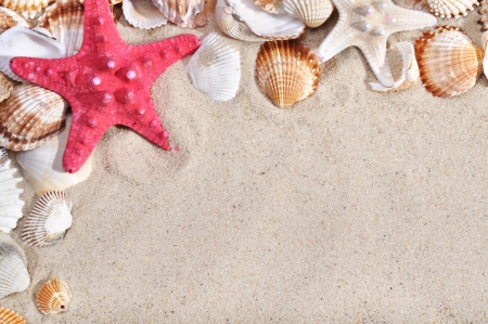 Sea shells and sand as background photo