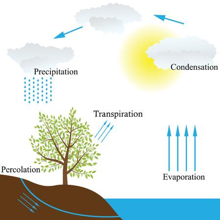 evaporacion: Representaci?n esquem?tica del vector del ciclo del agua en la naturaleza