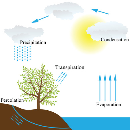 transpiration: Vector schematic representation of the water cycle in nature Illustration