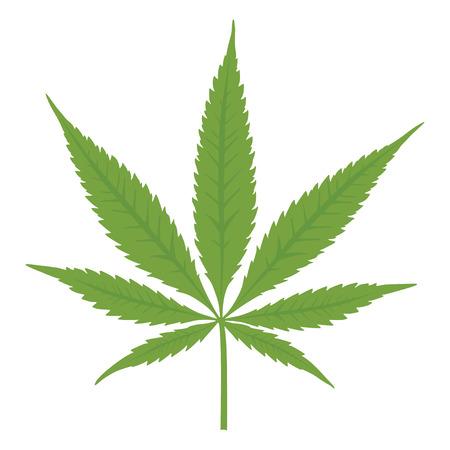 cannabis: Vector Cannabis Blatt auf wei�em Hintergrund Marihuana