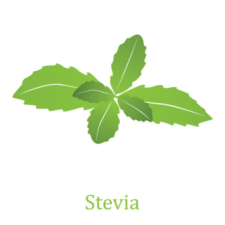 photosynthesis: Stevia rebaudiana, sweetleaf sugar substitute isolated on white background (Vector illustration) Illustration