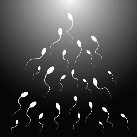 sex chromosomes: Vector illustration of spermatozoon. (Black and white)