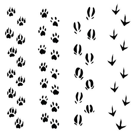 huellas de perro: Rastros de animales pasos aislados sobre fondo blanco (ilustración vectorial) Vectores
