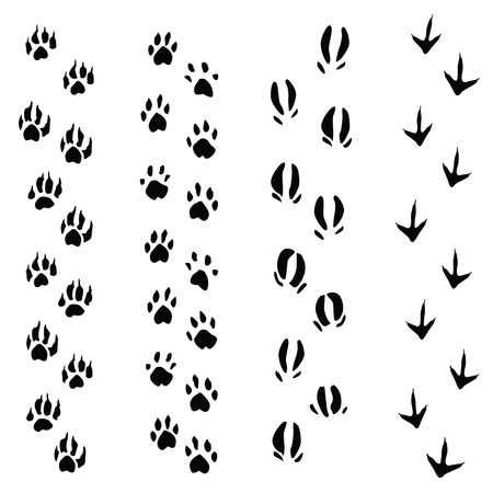 Trails of animals steps isolated on white background (vector illustration) Vector