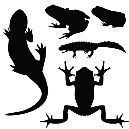 newt: Silhouettes of amphibians, vector illustration