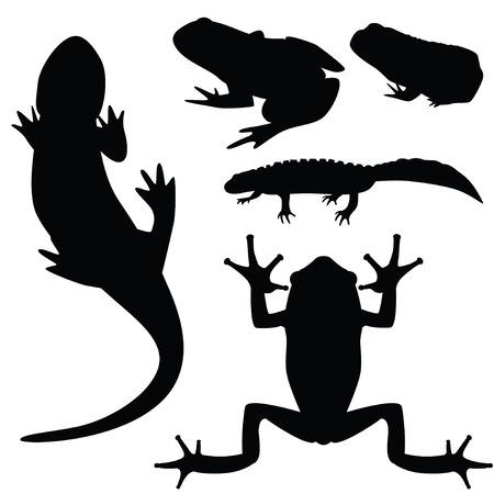 amphibians: Silhouettes of amphibians, vector illustration