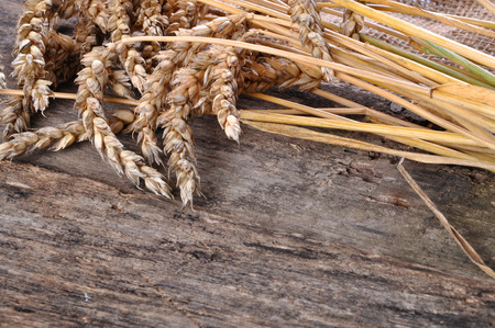 Wheat on the wooden table photo